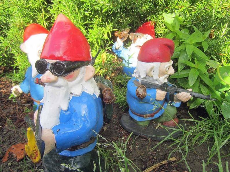 Combat Gnomes